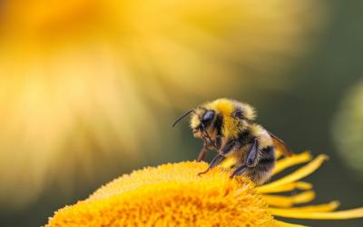 Bijenkasten op komst